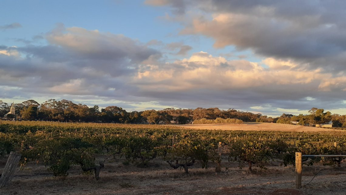호주 와인의 수도, 버로사 (Barossa)